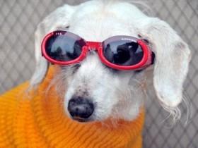 наиболее устаревшая собака во всем мире