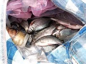 браконьеры в Балтийском море