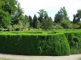 Культурный сад