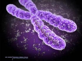 ген, хромосом