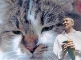 кот Яша