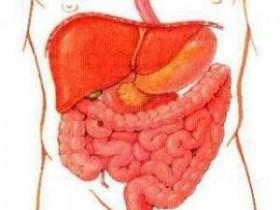 кишечный тракт