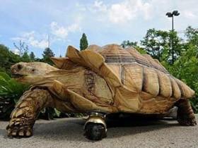 мост для черепахи
