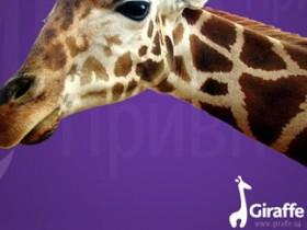 Intellecom,Giraffe