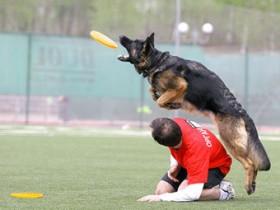 В городке РФ организовали состязание по собачьему фрисби