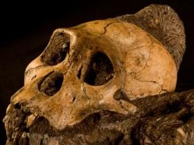 предок сегодняшних людей