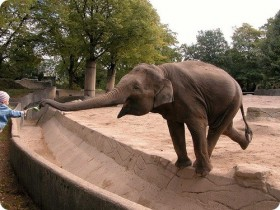 слон Петя
