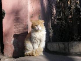 Дворы и коты Одессы
