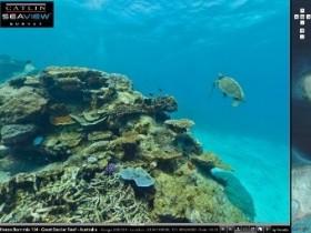 подводные картины Огромного Барьерного рифа