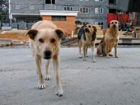 собаки бесприютные