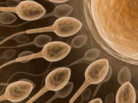 мужское бесплодие,сперматозоиды