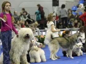 конкурс собак