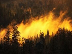 пожар в бору