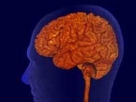 головной мозг,человека