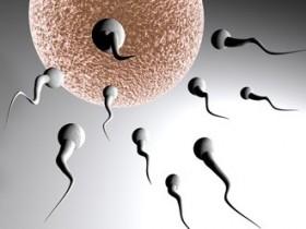 сперматазоиды
