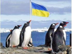 флаг,пингвины,украина