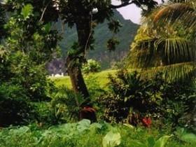 тропический,лес