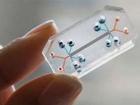 проозрачный микрочип