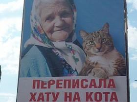 бабушка, кот,
