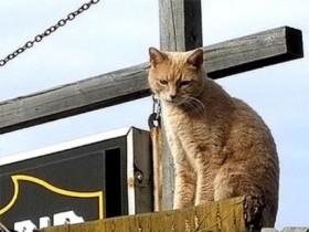 кот мэр