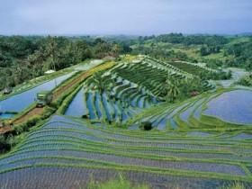 рисовые,поля
