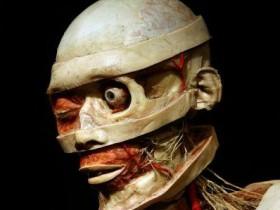 Выставка чел.тела