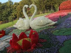 выставка,цветов