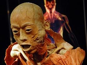 выставка The Human Body