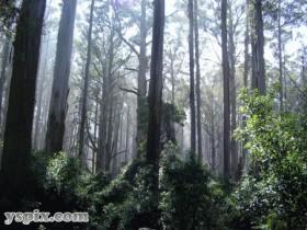 Шервудский,лес