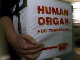 трансплантация,органы