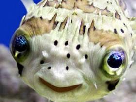 фуга,рыба