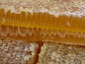 соты,мед