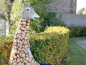 жираф,наряд