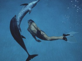 Мальчик и дельфин