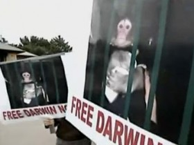 горилла,Дарвин