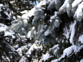 елочка,зима,лес