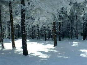 лес,зимний,карпаты