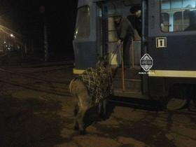 ишак в трамвае