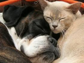 Исследователи обнаруживают: кто разумнее собаки либо собаки