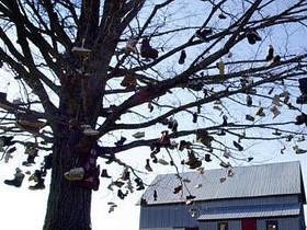 дерево башмак