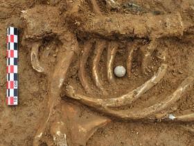 захоронение,кости,археология