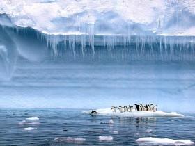 Антарктика,,пингвины