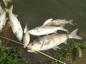 мертвая,рыба