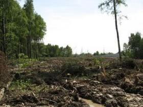 Химкинский,лес