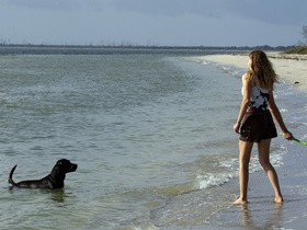 собака,на пляже
