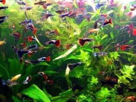 Аквариумные,рыбки