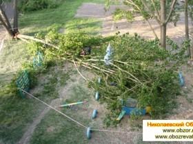 В Николаеве дерево упало во двор, где играли дети
