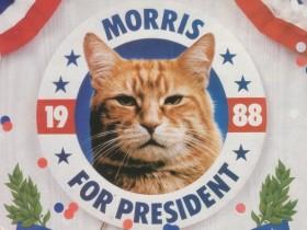 кот моррис