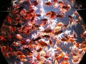 рыба,аквариум