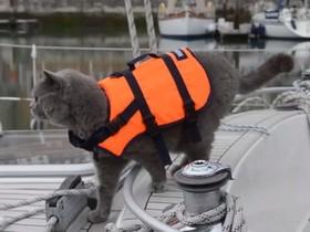 кот на яхте